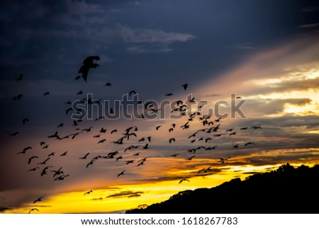 The rich colors of the sunset. Silhouettes of plenty birds against the background of a tropical forest and a tropical sunset. The coast of the Indian ocean, exotic destination