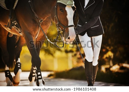 The rider leads her beautiful bay horse by the bridle rein along the road among the leaves of trees on a sunny, warm autumn day. Equestrian sports. Equestrian life. Сток-фото ©