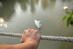 The right hand of a white Asian man gripped the Manila rope tightly as he watched geese and fish swimming in the public pool. Blurred nature background