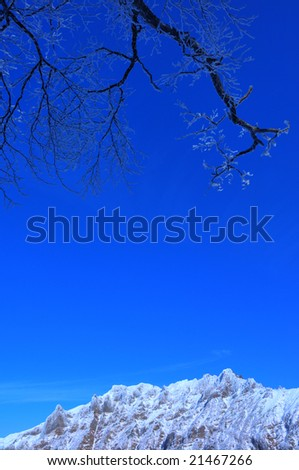The rime on trees and the mountain which froze(HDR)