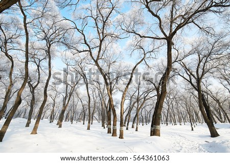 The rime scenery of northeast of china.The photo was taken in Daqing city Heilongjiang province,China.