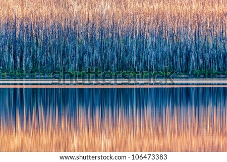 The rising sun paints trees devastated by pine beetles in a warm light as a calm morning allows for a reflection on Lake McDonald in Glacier National Park, Montana - stock photo