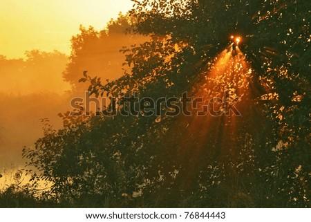 The rising sun pass through the fog