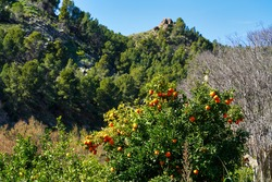 The river rio seguro in the little village of Abaran in valley ricote, in the Murcia region, Spain