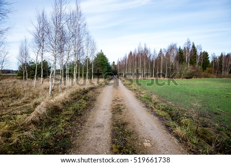 the road ahead. countryside in late autumn  trees and shadows