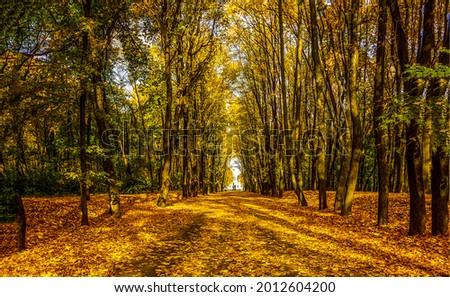 The road in the autumn forest. Autumn forest road. Autumn road. Road in autumn forest