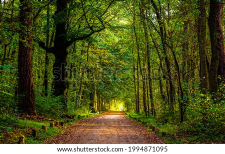 The road in the forest. Forest road view. Trees tunnel road in forest