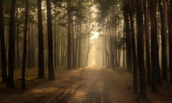 The road in the forest. Sunny morning. Tranquil nature scene.