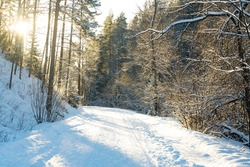 The road is covered with snow, illuminated by sunlight. Winter landscape with snow-covered trees in the national park.