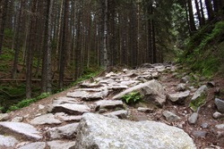 The road of stones in dark forest. Stone path between the trees.