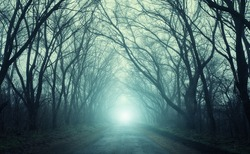The road passing through scary mysterious forest with green  light in fog in autumn. Magic trees. Nature misty landscape