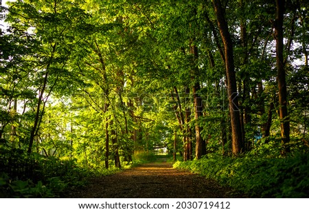The road through a dense green forest. Forest road way. Road in forest. Forestland road