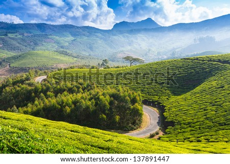 The road through plantations in India. Province Kerala