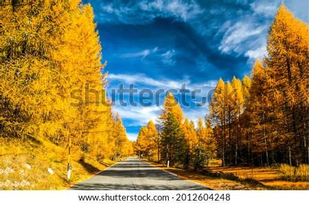 The road through the autumn forest. Autumn forest road. Road in autumn forest. Autumn road in forest