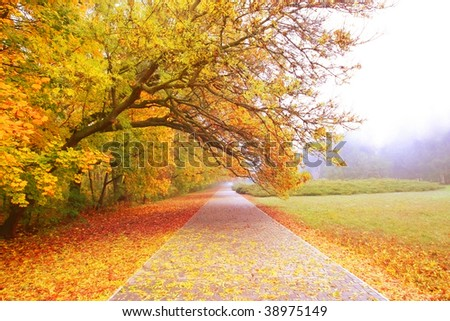 The road through the autumnal park in the morning