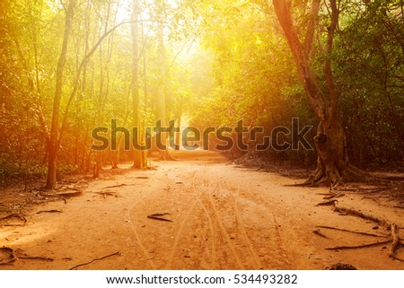 The road through the forest in the jungle with beautiful sunlight. Angkor, Cambodia #534493282
