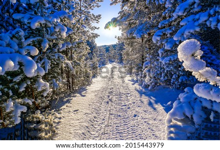 The road through the winter snow forest. Winter snow road in forest. Winter forest snowy road. Snow road in winter forest