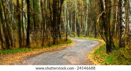 The road which was surrounded in the autumn green
