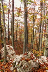 The rocky forest