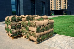The rolled grass lawn closeup is ready for laying. A pile of perfect rolled turf on a pallet closeup. Urban greening.