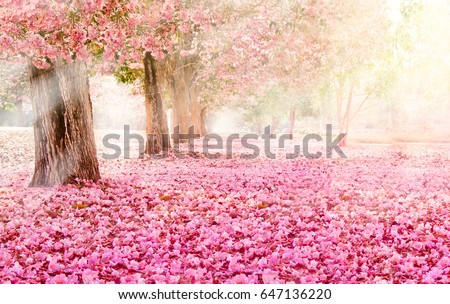 Shutterstock The romantic tunnel of pink flower trees
