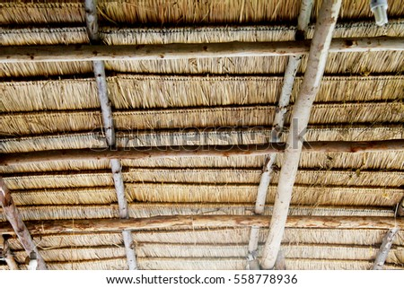 The roof from leaf #558778936