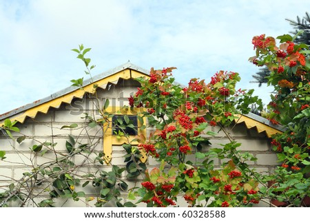 The roof of the rural house is decorated by ripe berries