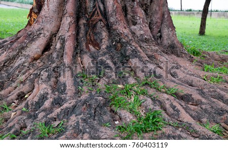 The roots green tree forest in graden. #760403119
