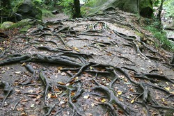the roots of a tree on the earth's surface
