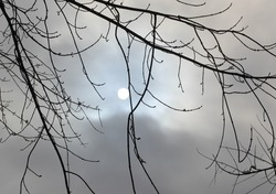 The round ball of the sun shining thru the clouds with tree branch silhouettes and snow clumps on some.