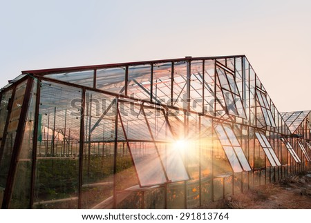The rows of young plants growing in the greenhouse Сток-фото ©