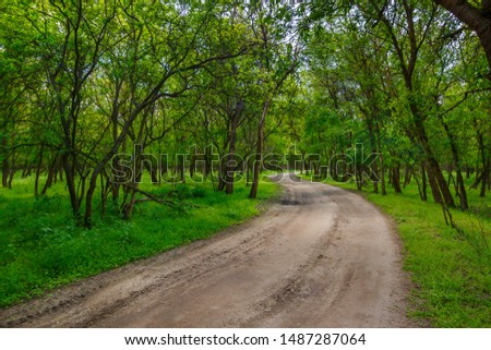 The rural unpaved road in the lush green forest with young trees. #1487287064