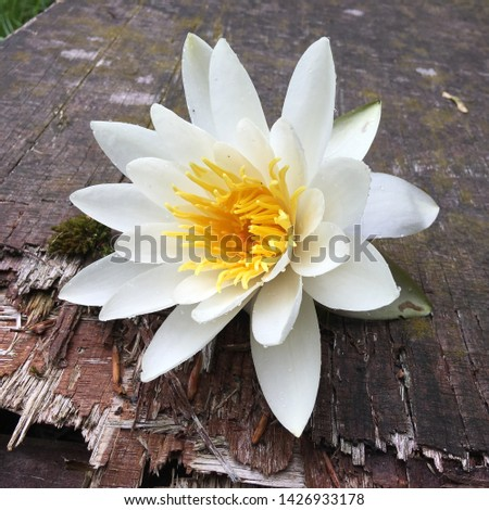 The rustic lily flower picture