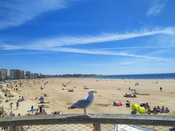 the Sables-d'Olonne beach in summer