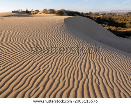 The sand dunes of Pismo Beach, California, town of Pismo Beach in distance Zdjęcia stock ©