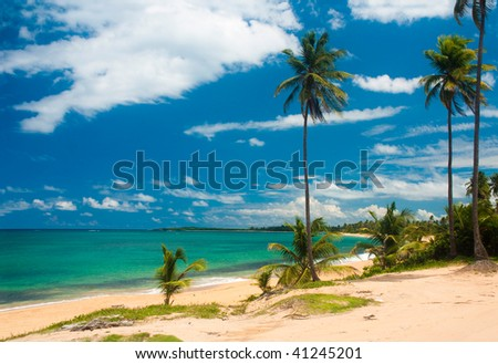 The sandy beach with palm trees and a  the ocean