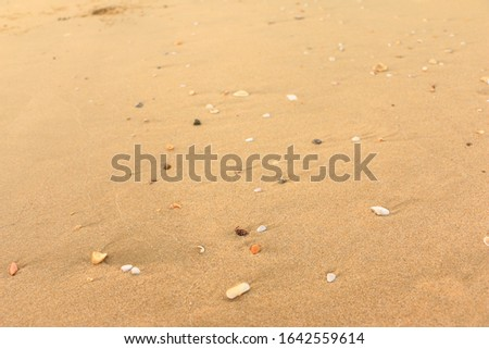 The sandy floor of the beach is decorated with natural shells. Shells in the sand