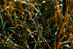 The saturated meadow grass in orange and green hue was shot close-up. The colorful photo was shot for your custom design.