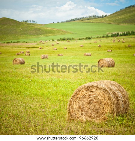 the scene of the meadow Inner Mongolia .