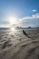 The scenery of a lonely dog sitting in front of the sea waiting for its owner.
