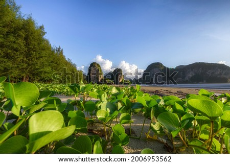 The scenery of Goat's foot creeper, Beach morning glory Ipomoea pes-caprae ,bayhops with a limestone mountain background at Trang province, Thailand.