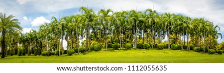 The scenery of Palm trees with green grass and blue sky.