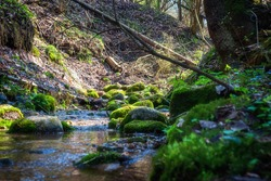 The scenery of spring woodland. Stream in the forest. Creek winding through stones in the forest. Calm water flows among mossy boulders and beech trees.