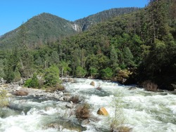 the scenic rapids of merced river and a waterfall on a forested hillside on a sunny spring day at el portal,  near yosemite national park, california