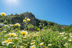 The scenic view of blooming daisies and the Tomb of Amyntas, also known as the Fethiye Tomb, is an ancient Greek rock-hewn tomb at ancient Telmessos, in Lycia, currently in Fethiye in Muğla.