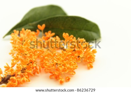 The scent of orange osmanthus