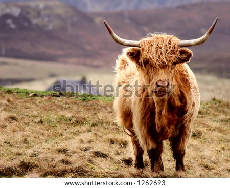 The Scottish Highlander