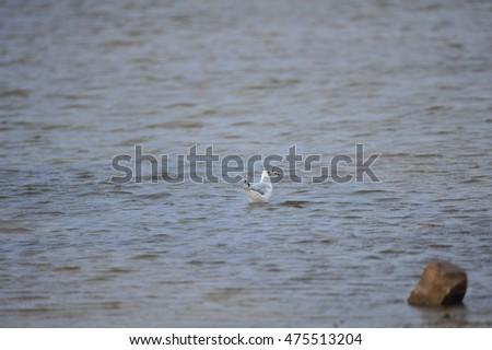 The sea bird