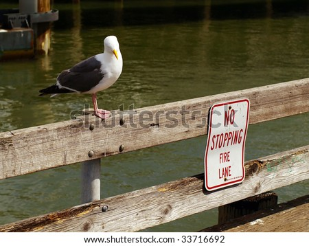 """The sea gull was puzzled by looking at the """"NO STOPPING FIRE LANE"""" sign."""