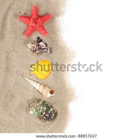 The sea shell isolated on white background